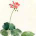 酷炫锁屏应用 唯美插画水彩花朵锁屏 v1.5